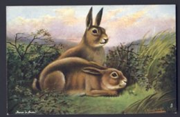 Two Rabbits, Resting. R. Roland Knight A/s. HARES UN FORM. OILETTE Raphael Tuck - Tuck, Raphael