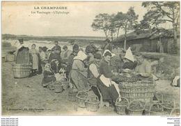 WW 51 LA CHAMPAGNE. Les Vendanges. L'Epluchage Des Raisins. Vignes Vignobles Vins 1917 - Epernay