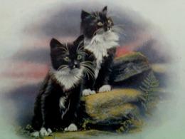 Cpa CHAT . 2 ADORABLES PETITS CHATS NOIR Et BLANC  Chatons Yeux Jaunes  CAT KATZE  CUTE KITTEN OLD PC SALMON - Chats