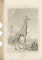 AFRIQUE ANCIENNE LA GIRAFFE 1835 INCISIONE DI LEMAITRE - Prints & Engravings