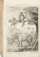 AFRIQUE ANCIENNE L'ELEPHANT LE CHIMPANZE 1835 INCISIONE DI LEMAITRE - Prints & Engravings