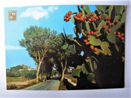 ESPANA - ISLAS BALEARES - MALLORCA - Capdepera - Mallorca