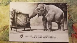 Soviet  Circus. Elephant . 1957 Rare Edition - Elefanten