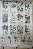 Affiche Publicité Principaux Parasites Des Végétaux 59x39 Cm Groupement Industrie Chimique Agriculture - Posters