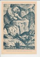 Presse 1894 Gravure 27 X 18 Cm Pôle Nord Animal Ours Polaire Et Phoques Faune Arctique Phoque 226CH19 - Non Classés