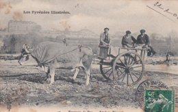 CP187 Pyrénées Atlantiques PAU 47 Attelage Béarnais Voyagé 31 01 1908 - Pau