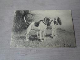 Illustrateur ( 1475 )   Pas Signée  - Carte Genre Viennoise -  Chiens De Chasse  Chien  Honden  Hond  Jacht - Illustrateurs & Photographes