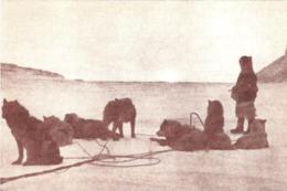 [MD3940] CPM - COLLEZIONE POSTALE ARTICA CON ANNULLO FIRME N° 24 1921 KNUD RASMUSSEN - PERFETTA - NV - Histoire