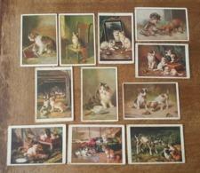 Publicité Savon Express Teinture - 11 Cartes Illustrées - Le Roy, Yo Lam, C. Keichert (Wien) - Chats, Chiens, Chatons - Werbepostkarten