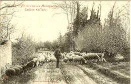 ENVIRONS De MONTPELLIER - LATTES - BERGER Et Ses MOUTONS - - France