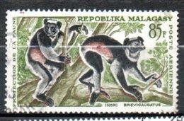 MADAGASCAR P Aérienne  Indri 1961 N°85 - Madagaskar (1960-...)
