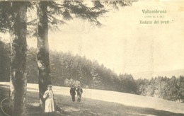 13317 - Vallombrosa - Veduta Dei Prati (Firenze)  F - Firenze