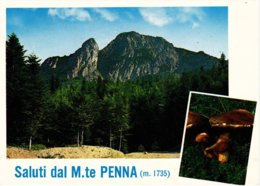 PARMA - Saluti Dal Monte Penna - Alta Val Di Taro - Funghi / Fungo / Mushroom / Champignon - 1977 - Parma