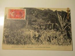 1928 OUBANGUI CHARI BOGANGOLO TO ESTONIA , NUDE WOMAN ON PINE APPLE FIELD , OLD POSTCARD   ,0 - Ubangui (1915-1936)