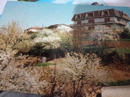 CASTEL SAN GIOVANNI POGGIO SALVINI PIACENZA  VB TAX 1988  HF973 - Piacenza