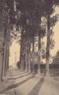 Sirault, Collège Du Christ Roi, L'avenue  Des Peupliers (pk61830) - Saint-Ghislain