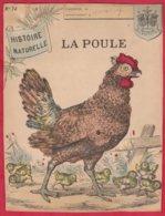 Protége Cahier Ancien Fin XIXéme Collection  Histoire Naturelle  La POULE - Book Covers