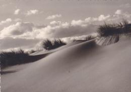 De Panne, Photo Studio Lionel (pk61865) - De Panne