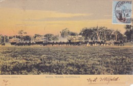 1991/ Wool Teams, Australia, 1906 - Australien