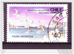 Chili, Chile, Oiseau, Antarctique, Polaire, Polar, Antartica, Antarctic, Bird, Iceberg, Nord, Northfaune - Antarctic Wildlife