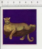 Image Papier / Puma Animal IM 14/46 - Vieux Papiers