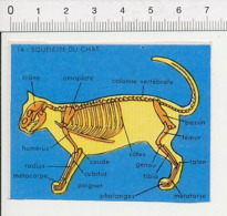Image Papier / Chat Anatomie Animale Animal IM 14/46 - Vieux Papiers