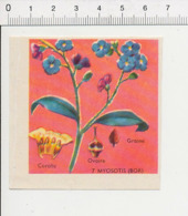 Image Papier Botanique Myosotis Fleur IM 14/46 - Vieux Papiers