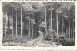 UCCLE-UKKEL - Fort-Jaco - Promenade Dans La Sapinière - N'a Pas Circulé - Uccle - Ukkel