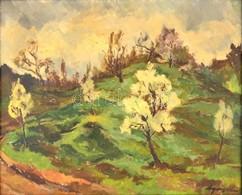Agricola Lídia (1914-1994): Tavasz A Virághegyen. Olaj, Vászon, Jelzett, Keretben, 65×80 Cm - Other Collections
