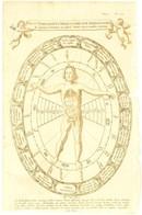 1682 Typus Sympathicus Microcosmi Cum Megacosmo Sive Signaturas Plantarum, Cum Singulis Humani Corporis Membris Exprimen - Engravings