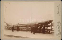 Cca 1900 Kifogott Bálna, Keményhátú Fotó Oscar Storch Műterméből, 10×16 Cm / Whale - Other Collections
