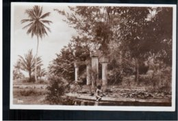 TANZANIA Garten Auf Zanzibar- A Garden On Zanzibar Island Old Photo Postcard - Tanzania