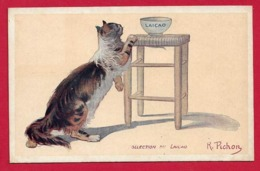 AE900 FANTAISIES   ANIMAUX CHAT CHATS   JOLI CHAT ANGORA ECAILLE - Katten