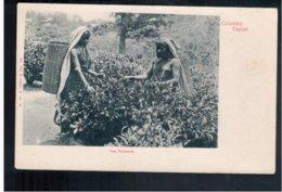 CEYLON  Colombo Tea Pluckers Ca 1902 Old Postcard - Sri Lanka (Ceylon)