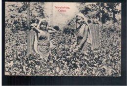 CEYLON  Tea- Plucking Ca  1910 Old Postcard - Sri Lanka (Ceylon)