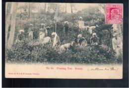 CEYLON Nr 64 Pruning Tea. Kandy 1905 Old Postcard - Sri Lanka (Ceylon)