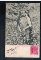 CEYLON Tamil Tea Pluckers 1906 Old Postcard - Sri Lanka (Ceylon)