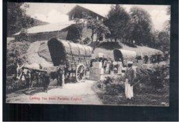 CEYLON Carting Tea From Factory Ca 1905 Old Postcard - Sri Lanka (Ceylon)