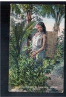 CEYLON Tea Plucking By Tamil Cooly Woman Ca 1915 Old Postcard - Sri Lanka (Ceylon)