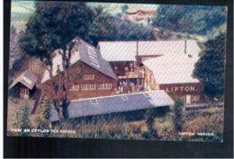 CEYLON Liptons Tea Series - View On Ceylan Tea Estate  Old Postcard - Sri Lanka (Ceylon)