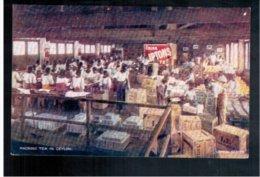 CEYLON Liptons Tea Series - Packing Tea In Ceylon Old Postcard - Sri Lanka (Ceylon)