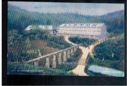 CEYLON Liptons Tea Series - View On Ceylon Tea Estate Old Postcard - Sri Lanka (Ceylon)