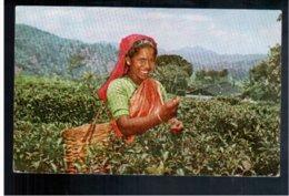 CEYLON Tea Plucker At Work Old Postcard - Sri Lanka (Ceylon)