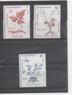 POLYNESIE Française  -  Plantes Médicinales : (fougère à Pied Du Lièvre), Lindernia Crustacea (faux Poison Malaisien), - Polynésie Française