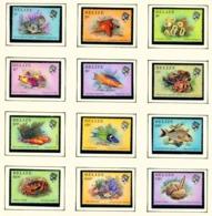 BELIZE  -  1984 Marine Life Definitives Set Unmounted/Never Hinged Mint - Belize (1973-...)