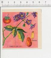 Image Papier Botanique Pomme De Terre Légume Fleur IM 14/46 - Vieux Papiers