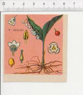 Image Papier Botanique Le Muguet Fleur IM 14/46 - Vieux Papiers
