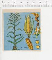 Image Papier Botanique épis De Mais Plante Agriculture IM 14/46 - Vieux Papiers