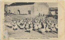 ~  JP  ~  88  ~ Environs De CONTREXEVILLE .  MANDRES  SUR   VAIR  ~ Troupeaux D ' Oies  ~ - Autres Communes