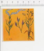 Image Papier Botanique Alfa Plante Herbacée Herbe IM 14/46 - Vieux Papiers